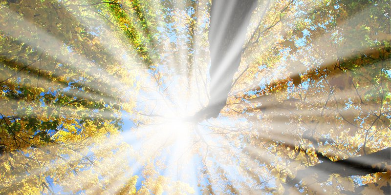 57123-sunrays-in-the-forest - 3000x1500.jpg